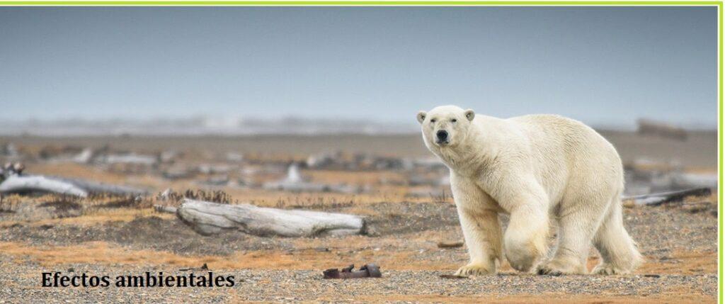 causas riesgo ambiental