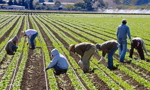 peligros laborales en la agricultura